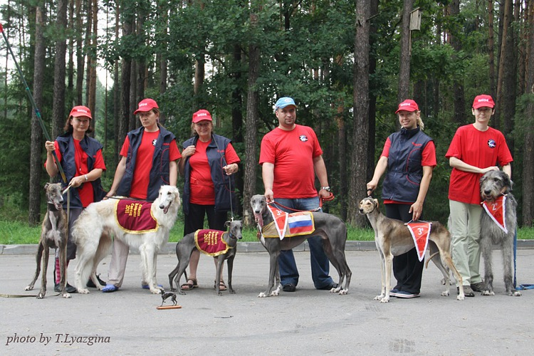 Russian Sighthounds with prizes